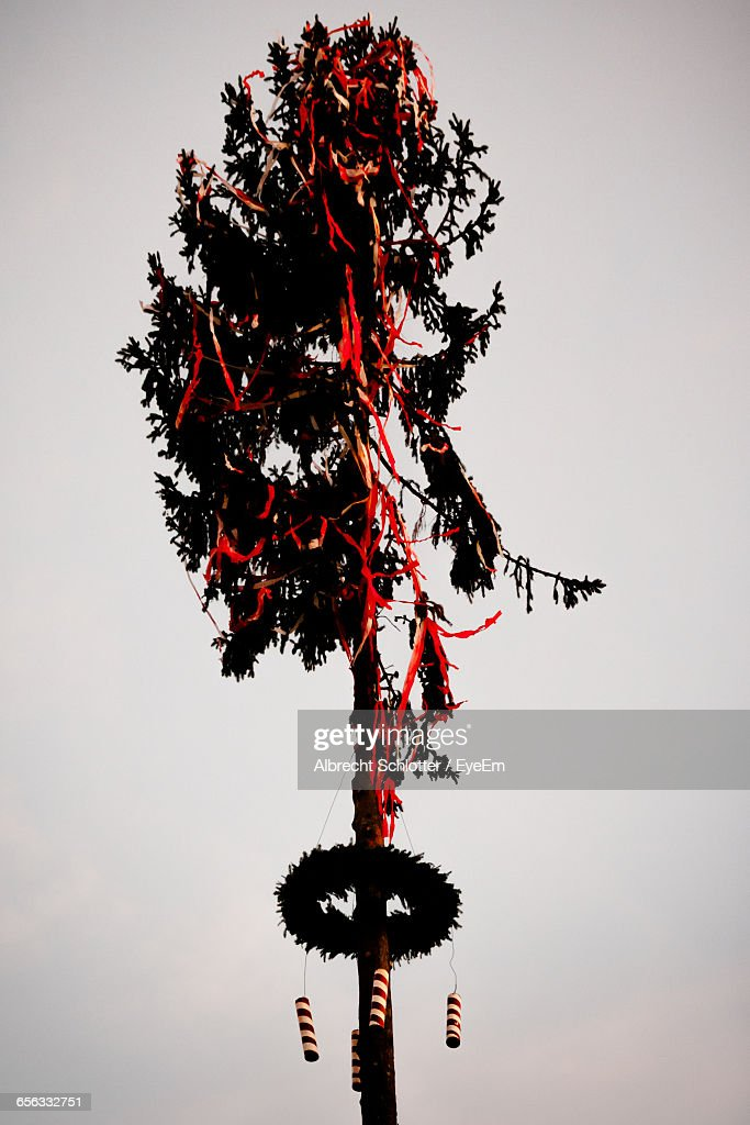 Low Angle View Of Decorated Tree Against Clear Sky During Festival : Stock-Foto