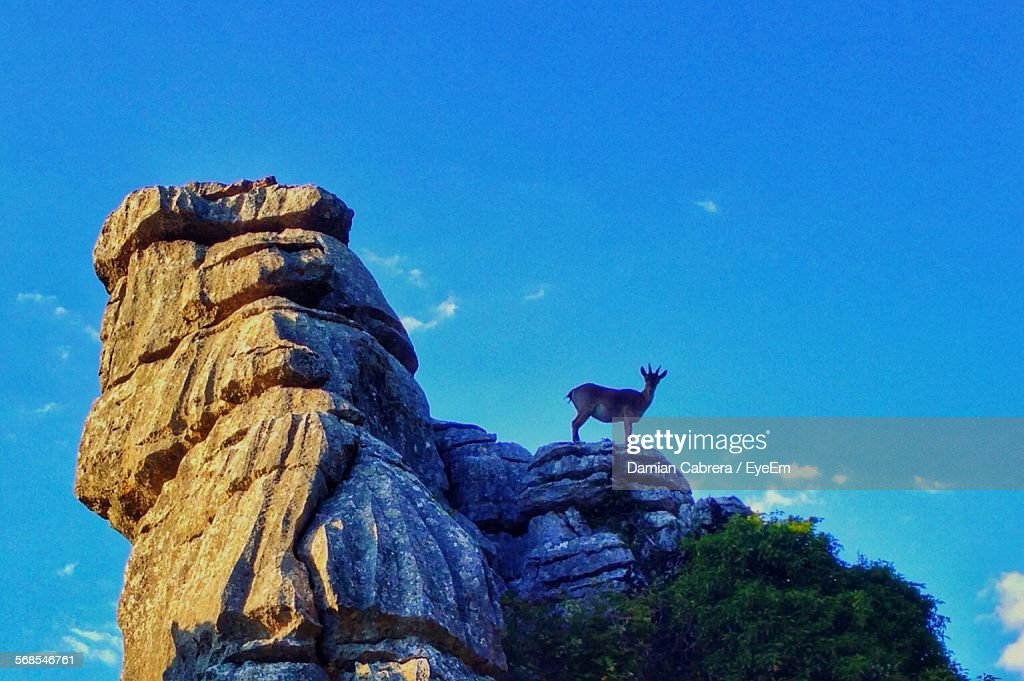 Low Angle View Of Deer Standing On Mountain Against Blue Sky : Stock Photo
