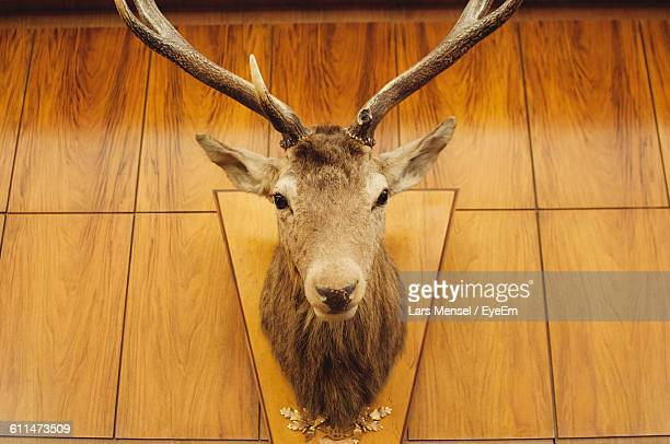 Low Angle View Of Deer Taxidermy Mounted On Wall