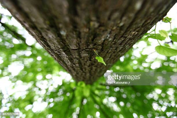 Low angle view of defocused tall tree, with single leaf in the foreground