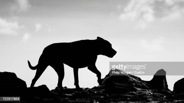 Low Angle View Of Dog Against Clear Sky