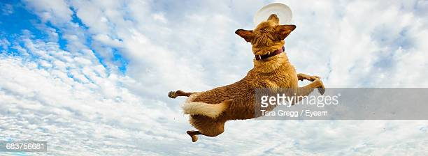 Low Angle View Of Dog Against Sky