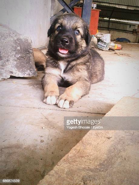 Low Angle View Of Dog Lying On Footpath