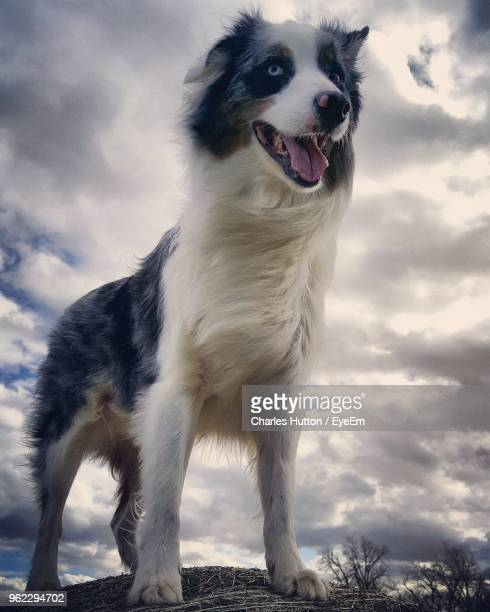 low angle view of dog standing on rock against sky - hutton stock photos and pictures