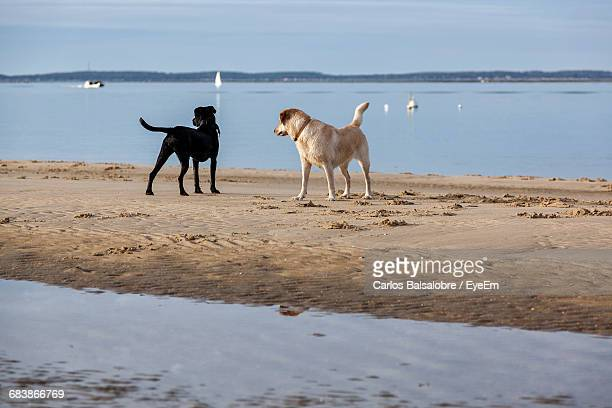 Low Angle View Of Dogs At Beach Looking Away