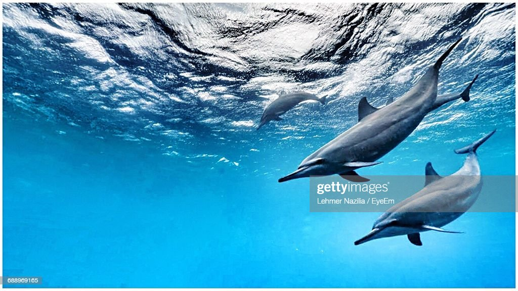 Low Angle View Of Dolphins Swimming In Sea : Stock Photo