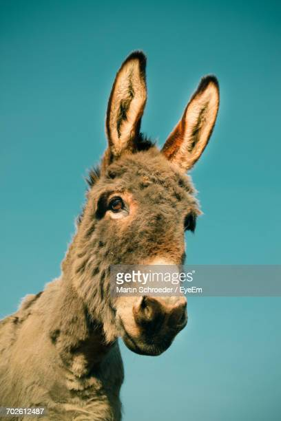 Low Angle View Of Donkey Against Blue Sky