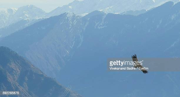 Low Angle View Of Eagle Flying Against Mountains