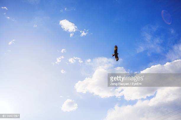 Low Angle View Of Eagle Flying Against The Sky