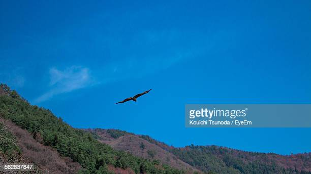 Low Angle View Of Eagle Flying In Blue Sky