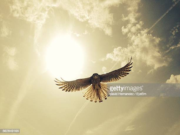 low angle view of eagle flying - flying stock photos and pictures
