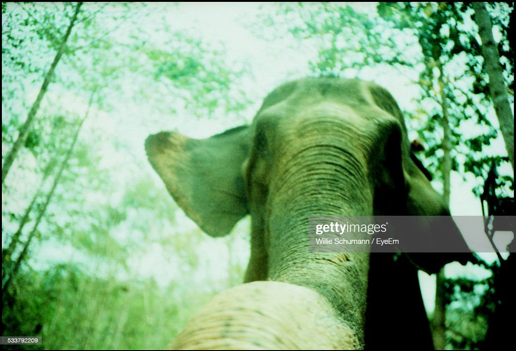Low Angle View Of Elephant : Foto stock