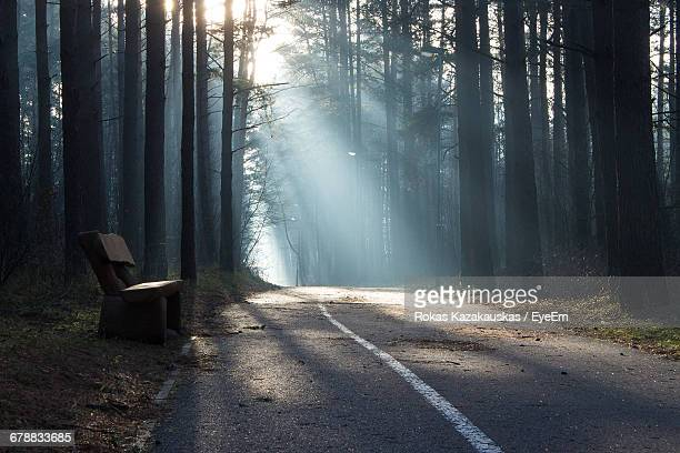 Low Angle View Of Empty Road Along Trees In Forest