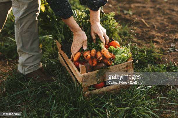low angle view of farmer vegetables on field - farm stock pictures, royalty-free photos & images