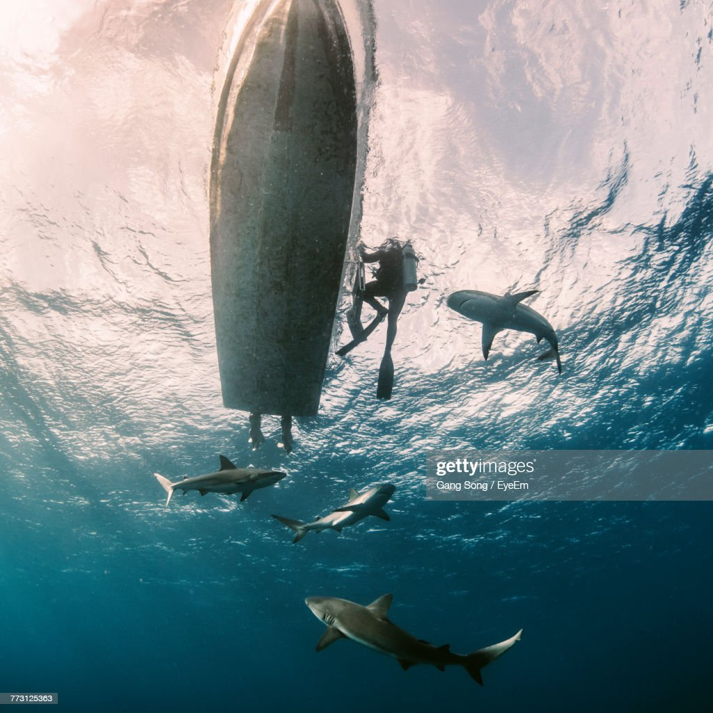 Low Angle View Of Fish Swimming In Sea : Photo