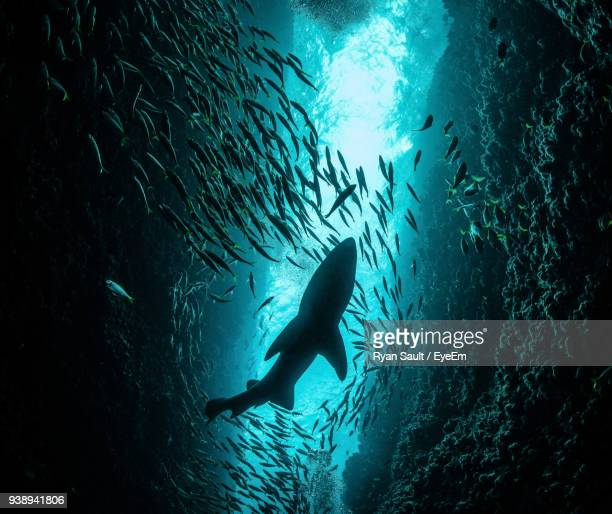 low angle view of fish swimming in sea - whale shark stock pictures, royalty-free photos & images