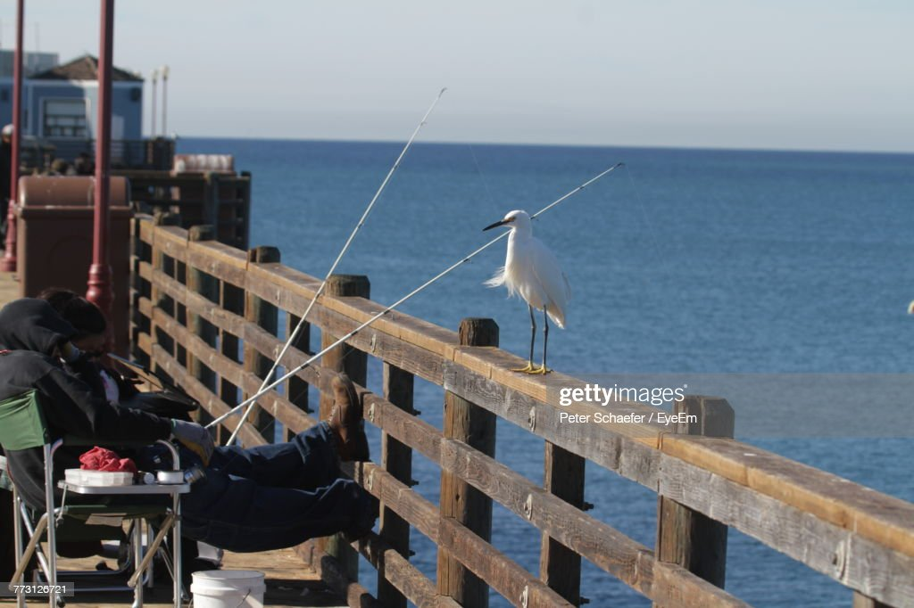 Low Angle View Of Fishing Net On Sea Against Clear Sky : Photo
