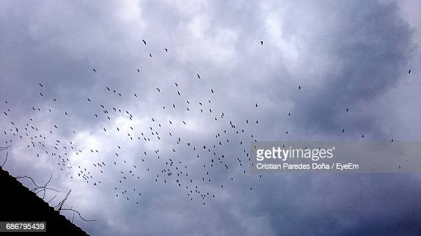 Low Angle View Of Flock Of Birds Flying