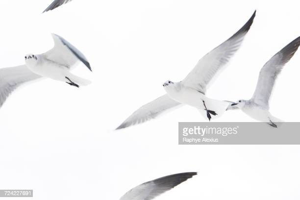 Low angle view of flock of seagulls flying