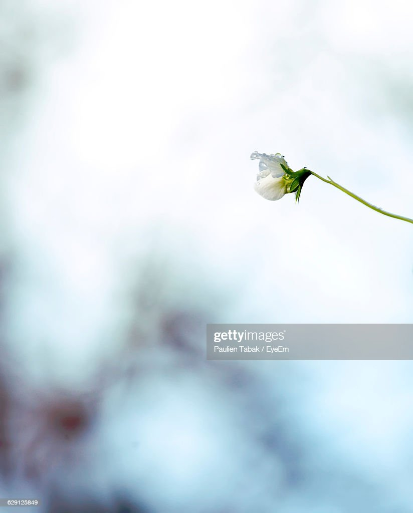 Low Angle View Of Flower Blooming Against Sky : ストックフォト