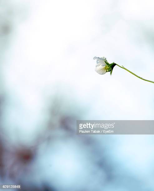 low angle view of flower blooming against sky - paulien tabak stock-fotos und bilder