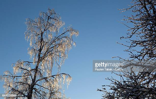 low angle view of flower tree against blue sky - paulien tabak foto e immagini stock