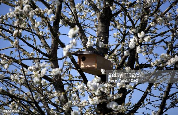low angle view of flower tree against clear sky - paulien tabak stock pictures, royalty-free photos & images