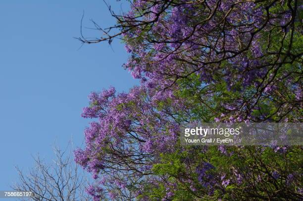Low Angle View Of Flower Tree Against Clear Sky