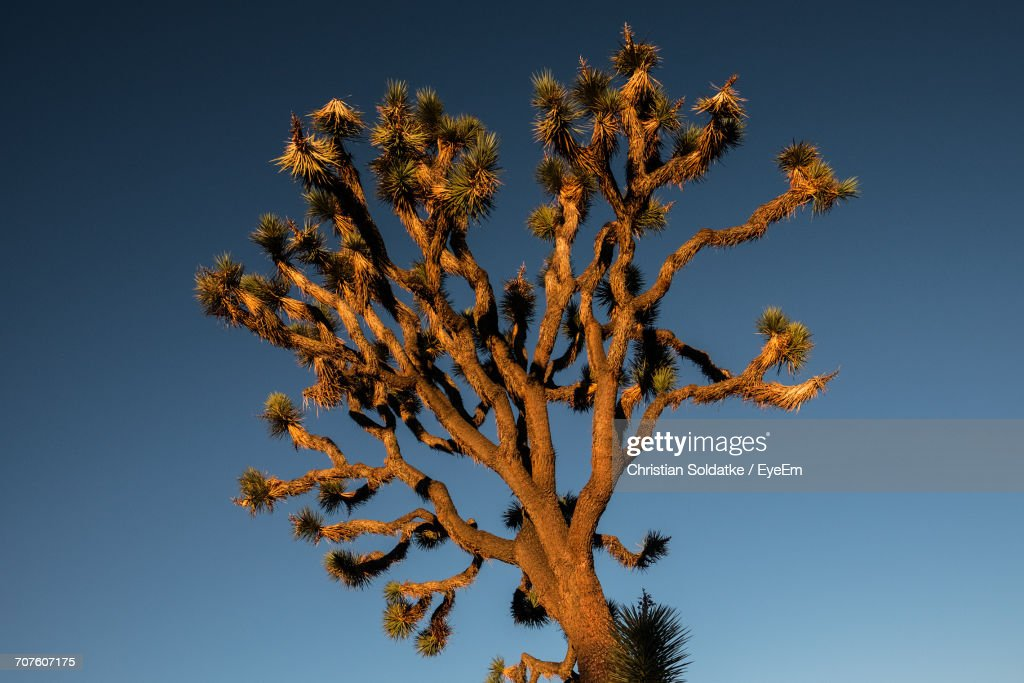 Low Angle View Of Flower Tree Against Sky : Stock Photo