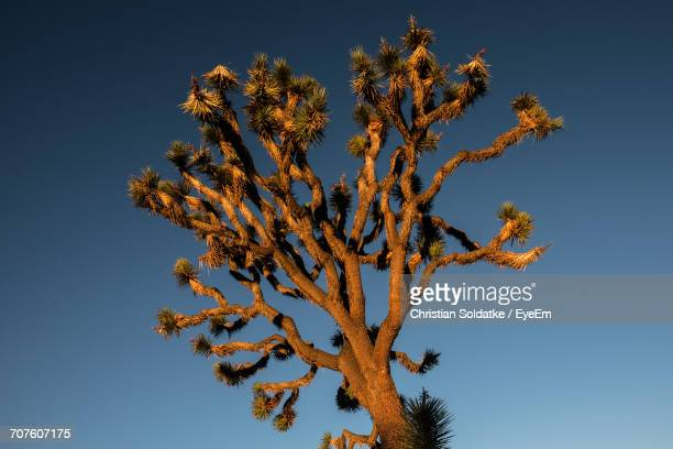 low angle view of flower tree against sky - christian soldatke stock pictures, royalty-free photos & images