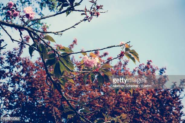 low angle view of flower tree against sky - albrecht schlotter stock pictures, royalty-free photos & images