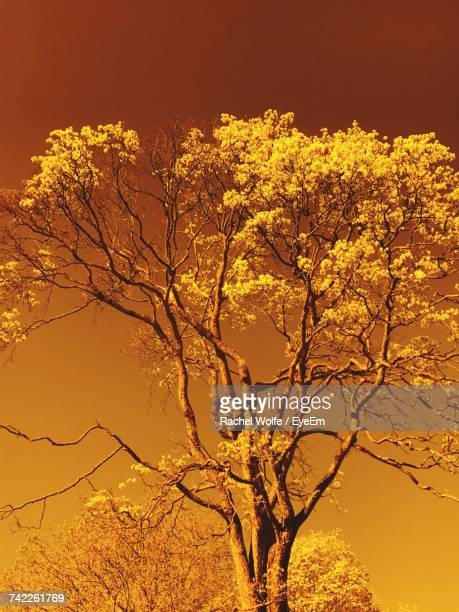 low angle view of flower tree against sky - rachel wolfe stock pictures, royalty-free photos & images