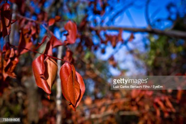 low angle view of flower tree - filho stock pictures, royalty-free photos & images