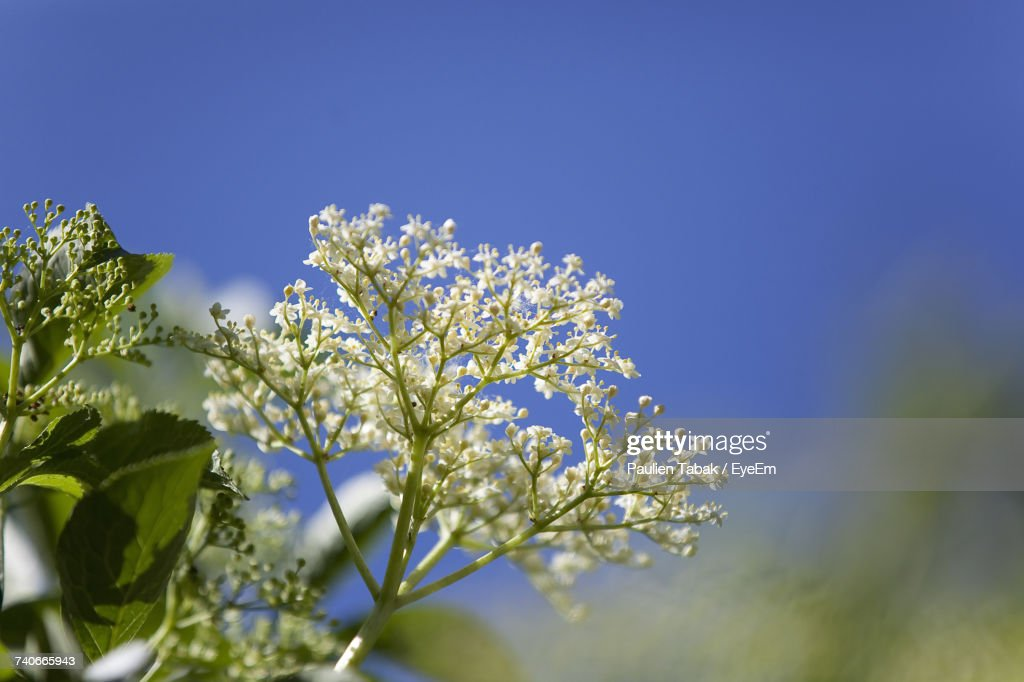 Low Angle View Of Flower Tree : Stock-Foto