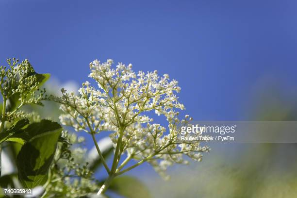 low angle view of flower tree - paulien tabak stock-fotos und bilder