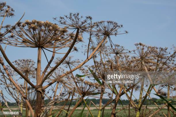 Low Angle View Of Flower Trees Against Sky