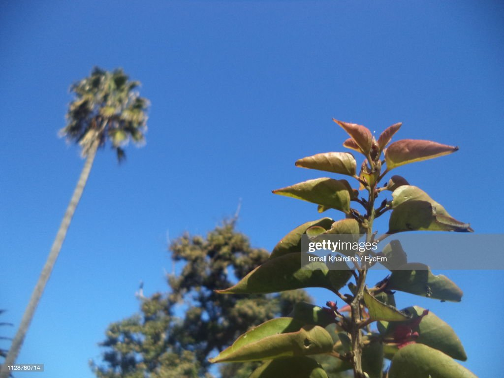 Low Angle View Of Flowering Plant Against Blue Sky : Stock Photo
