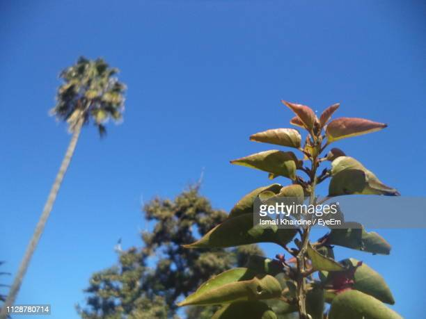 low angle view of flowering plant against blue sky - ismail khairdine stock photos and pictures