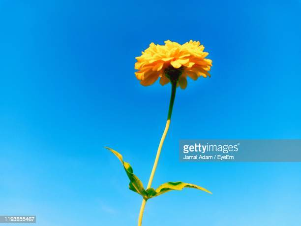 low angle view of flowering plant against blue sky - 茎 ストックフォトと画像