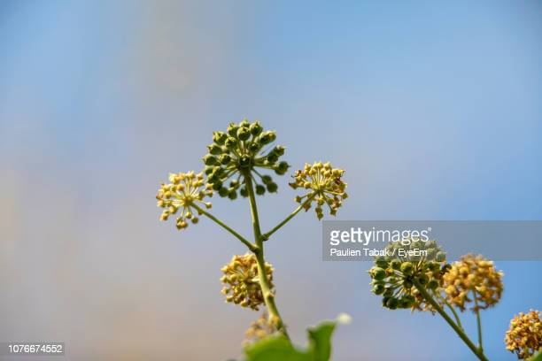 low angle view of flowering plant against clear sky - paulien tabak stock pictures, royalty-free photos & images