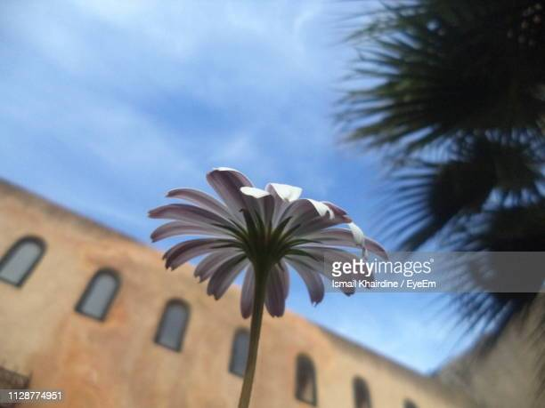 low angle view of flowering plant against sky - ismail khairdine stock photos and pictures