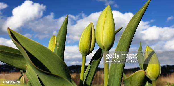 low angle view of flowering plant against sky - knop plant stage stockfoto's en -beelden