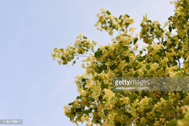 low angle view of flowering plant against sky - jelena ivkovic stock pictures, royalty-free photos & images