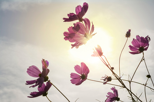 Low Angle View Of Flowering Plant Against Sky - gettyimageskorea