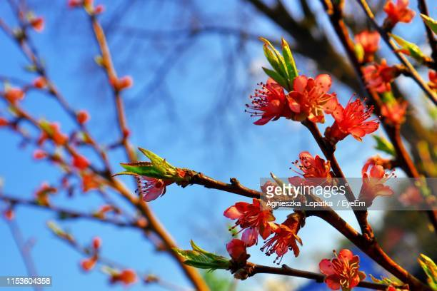 Low Angle View Of Flowering Plant Against Tree