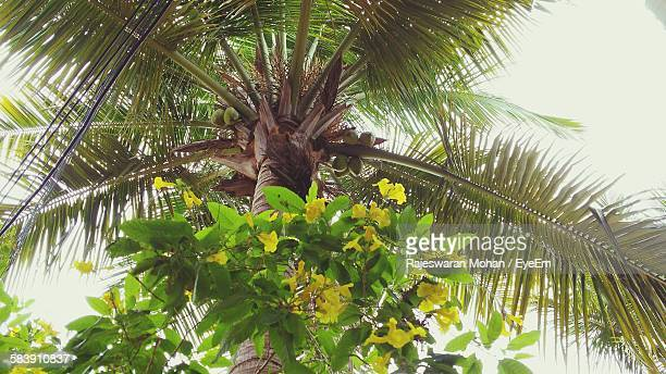 Low Angle View Of Flowering Plant And Coconut Tree Against Sky
