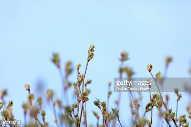 low angle view of flowering plants against blue sky - paulien tabak stock pictures, royalty-free photos & images