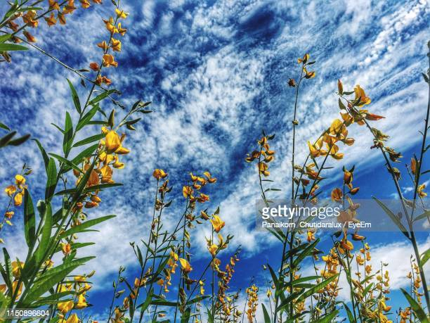 low angle view of flowering plants against cloudy sky - panaikorn chutidaralux stock photos and pictures