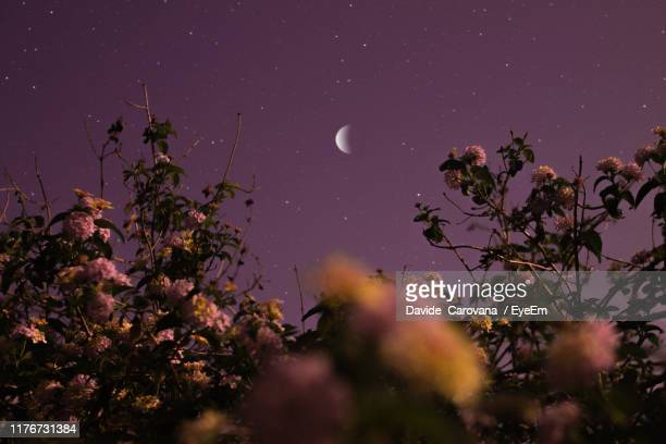 low angle view of flowering plants against sky at night - flower moon stock pictures, royalty-free photos & images