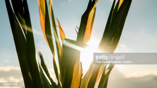 low angle view of flowering plants against sky - kintamani district stock pictures, royalty-free photos & images